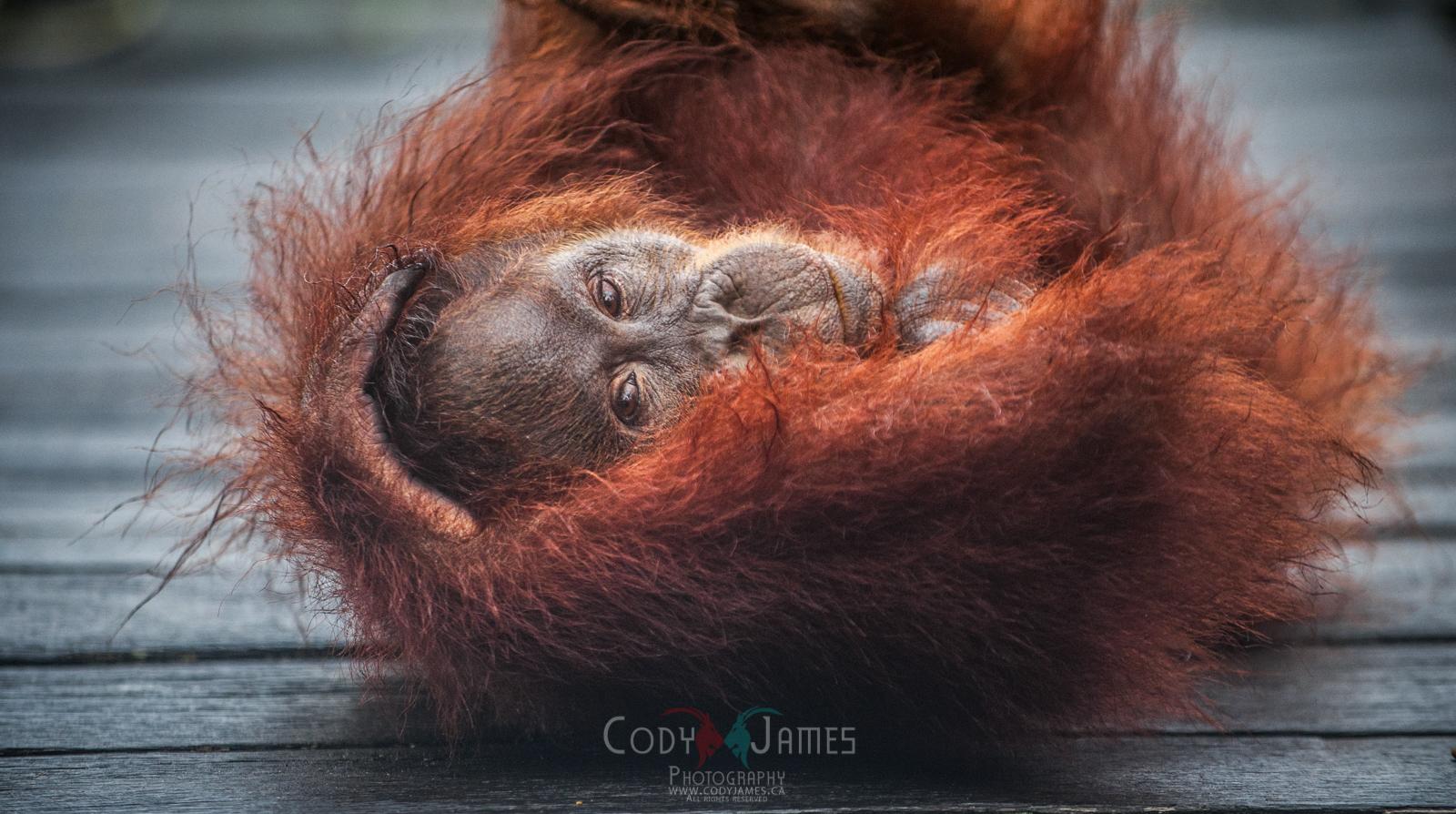 Calgary Photographer | Cody James | Nature Photographer